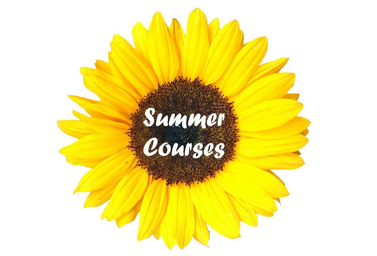 Summer Courses 17 Sunflower